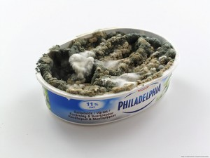 mold-in-cream-cheese-container-300x225